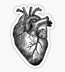 Pegatina Anatomía del corazón de la vendimia