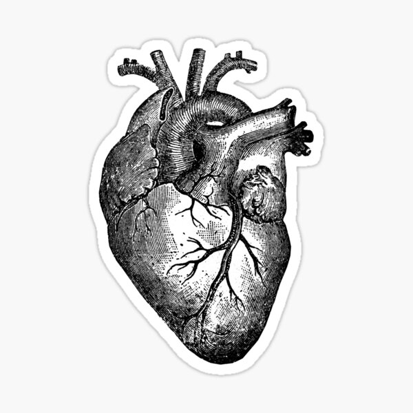 Vintage Herzanatomie Sticker