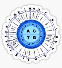 DNA, Genetischer Code, Kreis, Gen, Codon, Aminosäure, Sticker