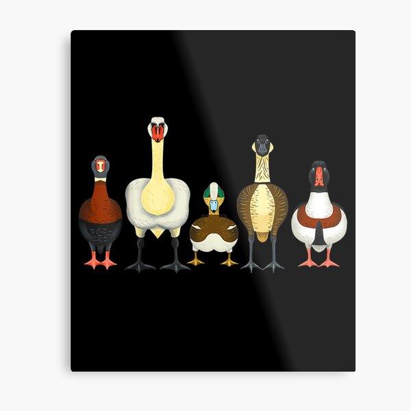 Tardigrade Designs Ducks Metal Print