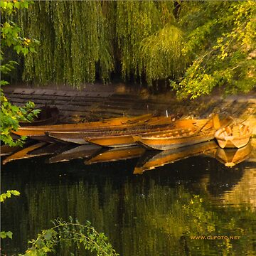 Lying in Wait, Tübingen, Germany by leemcintyre