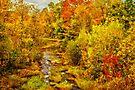 Autumn on the Ammonoosuc by PhotosByHealy