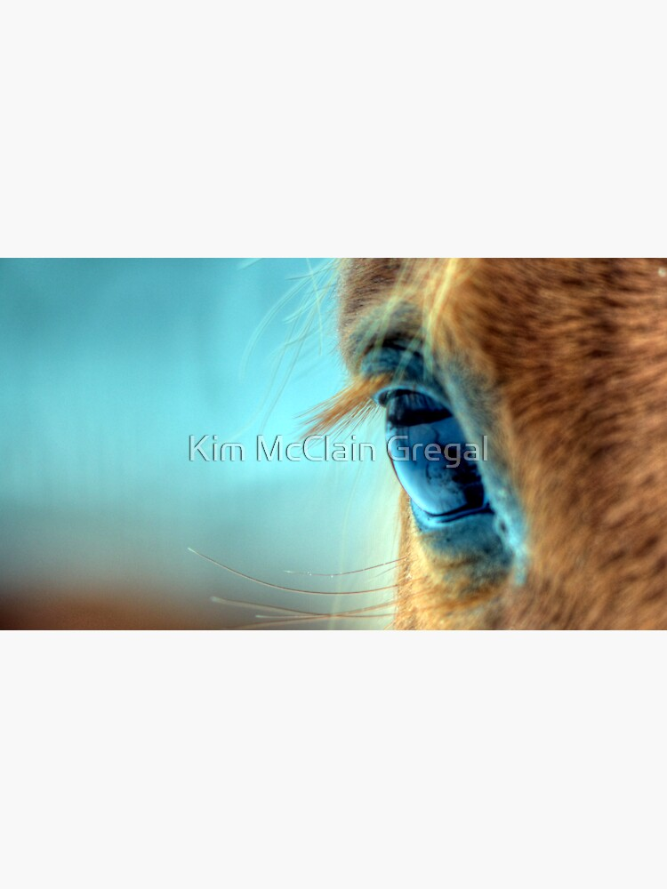 Horse Eye by fotokmcc