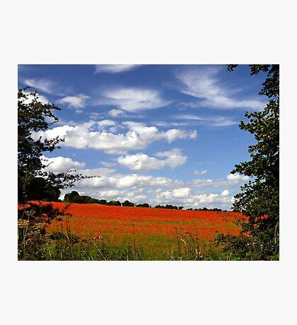 Poppy Landscape  Photographic Print