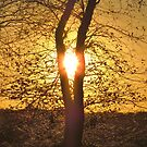 There Is Sunshine in My Heart Today by lorilee
