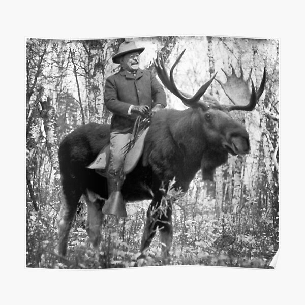 Teddy Roosevelt Riding A Bull Moose Poster