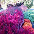 A Fall Garden by Sandra Fortier
