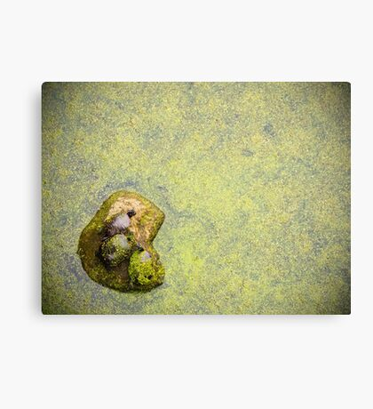 Turtle Trio Canvas Print