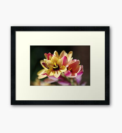 Happy and Bright Ixia Framed Print