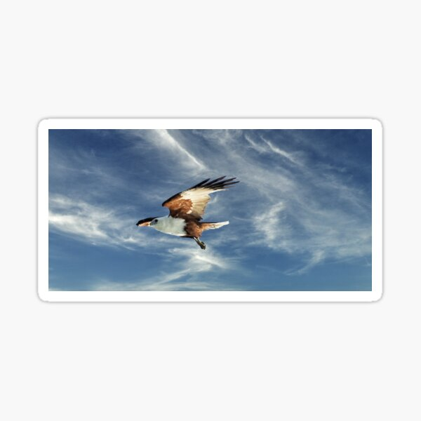 Osprey Flight. Photo Art, Prints, Gifts. Sticker