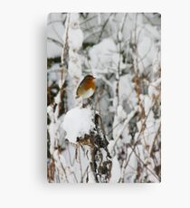 Robin red breast winter design for Christmas  Canvas Print