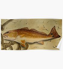 Redfish In The Boat! Poster