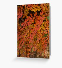 Multicolored Miniatures - VL Greeting Card