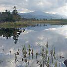 Five Lakes, Hokkaido, ,Japan by johnrf