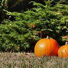 Pumpkins! by Vicki Spindler (VHS Photography)