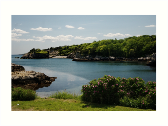 The Cove by Barry Doherty