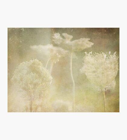 wild grasses 21 Photographic Print