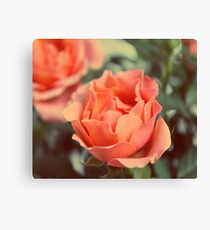 Secret Garden | Peach rose Canvas Print