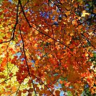 Autumn 2016 by Elfriede Fulda