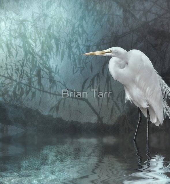 Great Egret in moonlight by Brian Tarr
