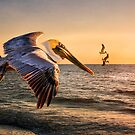 Pelican Sunset by Brian Tarr