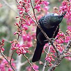 Tui - the contortionist.......!! by Roy  Massicks