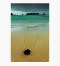 The Stranding Photographic Print