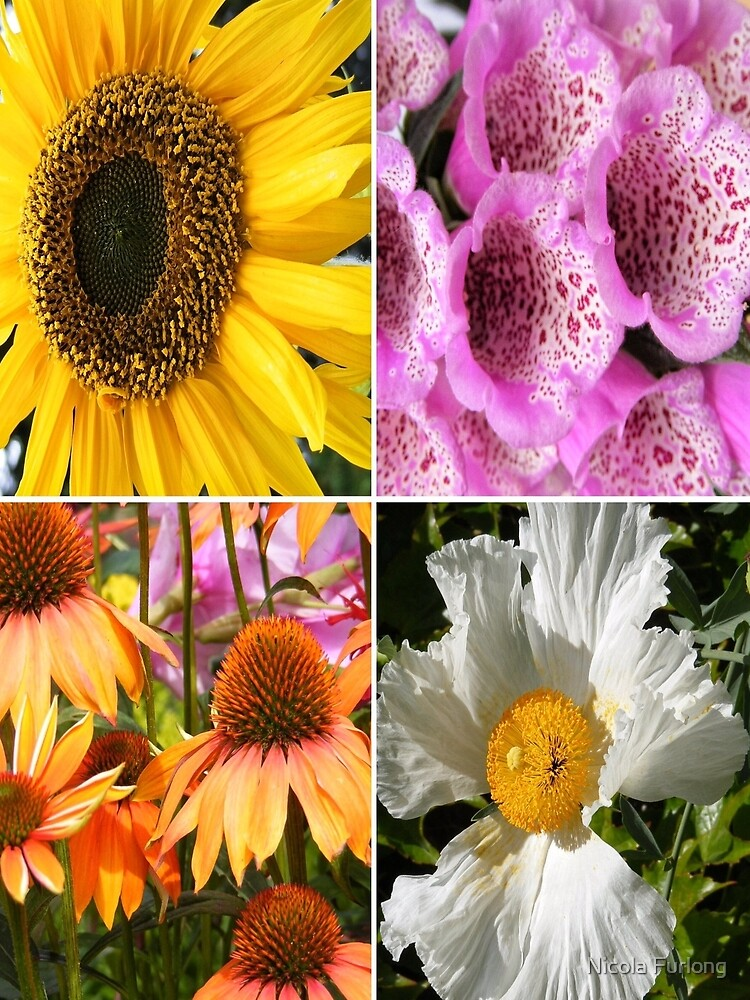 FLOWER BLOSSOMS, SUNFLOWER, FOXGLOVER,CONEFLOWER, POPPY  by nicolafurlong