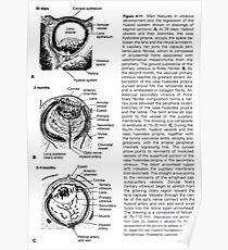 sick human eye Poster