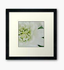 White chrysanth Framed Print