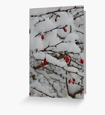Berries on Snow Greeting Card