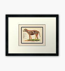Vintage Veterinary School Dog Anatomy Chart Framed Print