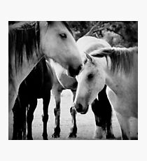 Schöne Pferde Fotodruck