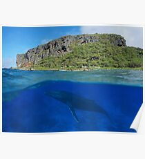 Coastal cliff split with whale underwater sea Poster