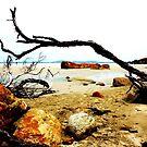 On The Beach Wilson's Promontory by Deirdreb