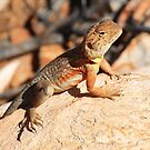 Northern Territory Lizard by Deirdreb
