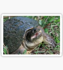 Snapping Turtle Sticker