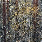12.10.2016: Fall colours in the Forest by Petri Volanen