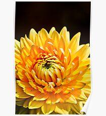 Bright Yellow Chrysanthemum Poster