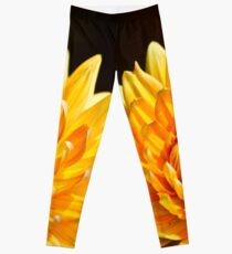 Bright Yellow Chrysanthemum Leggings