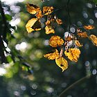 First Signs Of Fall by Lee  Gill