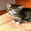 Tabby Kitten Named Miss Pip Squeak by taiche