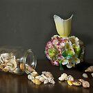 Aussie Shells & Antique Porcelain by Gilberte