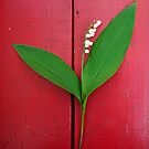 Lily of the Valley on Red by Mike Solomonson