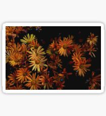 Orange Daisies  Sticker