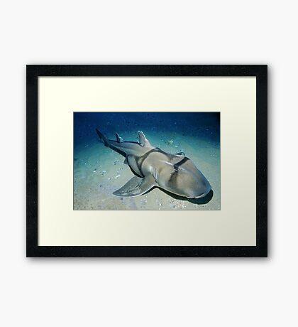 Port Jackson Shark Framed Print