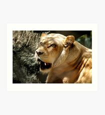 ๑۩۞۩๑ THE FACE OF A LIONESS ๑۩۞۩๑ Art Print