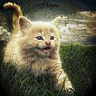 Kitten in the grass by Alan Mattison