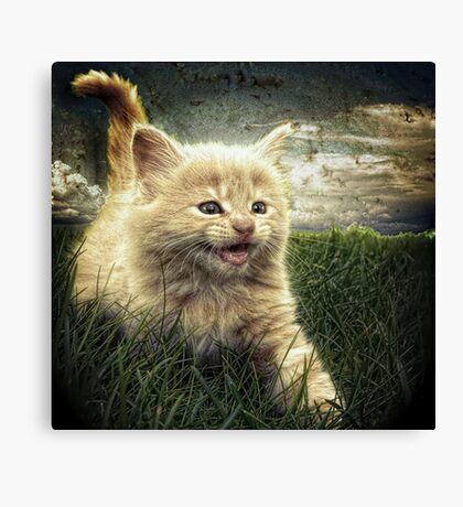 Kitten in the grass Canvas Print