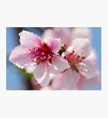 peach blossom in spring Photographic Print